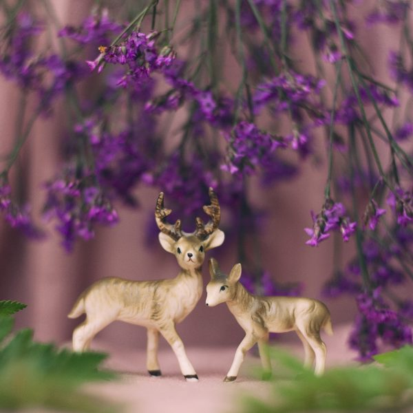 Tiny Deer Studio